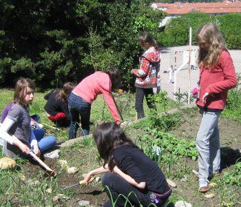 association verts a soi - 3